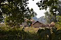 Countryside - Dandadhar - Dhenkanal 2018-01-25 9355.JPG