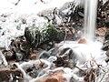 Cours d'eau hivernal.JPG