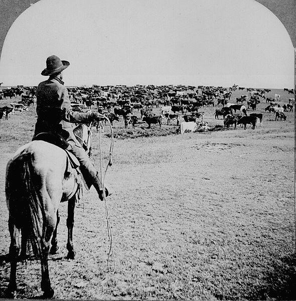 File:Cowboy1902.jpg