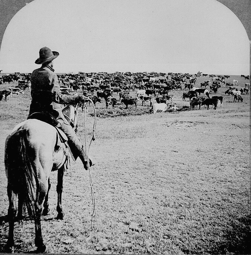 Cowboy1902
