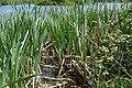 Craigavon Lakes - panoramio (1).jpg