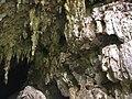 Cueva del Guacharo 02.JPG