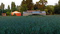 Curico, campo (13654133385).jpg