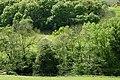 Cwm Gwydol above Abercegir - geograph.org.uk - 1314242.jpg