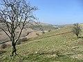 Cwm Pysgotwr Fawr, near Nant Gwernog, Ceredigion - geograph.org.uk - 1219072.jpg