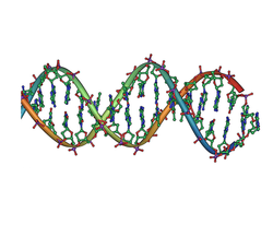 DNA double helix horizontal.png