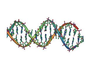 DNA profiling - Image: DNA double helix horizontal