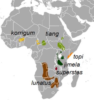 Common tsessebe - Image: Damaliscus lunatus