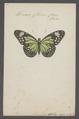 Danais - Print - Iconographia Zoologica - Special Collections University of Amsterdam - UBAINV0274 048 02 0002.tif