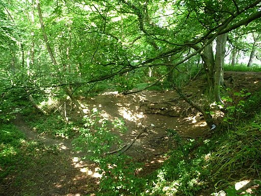 Dappled light, Hetchell Wood in summer (geograph 5049824)