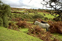 Dartmoor wildlife.jpg