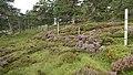 Deer Fence (An Sgòr Dubh) on Mar Lodge Estate (06AUG17) (3).jpg
