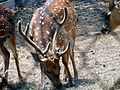 Deer with dots.jpg