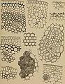Denkschriften - Österreichische Akademie der Wissenschaften (1915) (20671859369).jpg