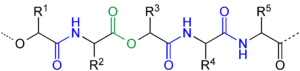 Depsipeptide - Example of a depsipeptide with 3 amide groups (highlighted blue) and one ester group (highlighted green). R1 and R3 are organic groups (e. g. methyl) or a hydrogen atom found in α-hydroxycarboxylic acids. R2, R4 and R5 are organic groups or a hydrogen atom found in common amino acids.