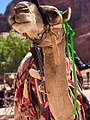 Desert Safari- Camel.jpg
