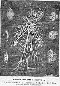 Die Gartenlaube (1890) b 083.jpg