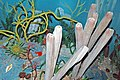 Diorama of a Devonian seafloor 9 (45623881011).jpg