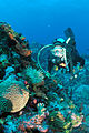 Diver and anemone, Monito Island, Puerto Rico.jpg