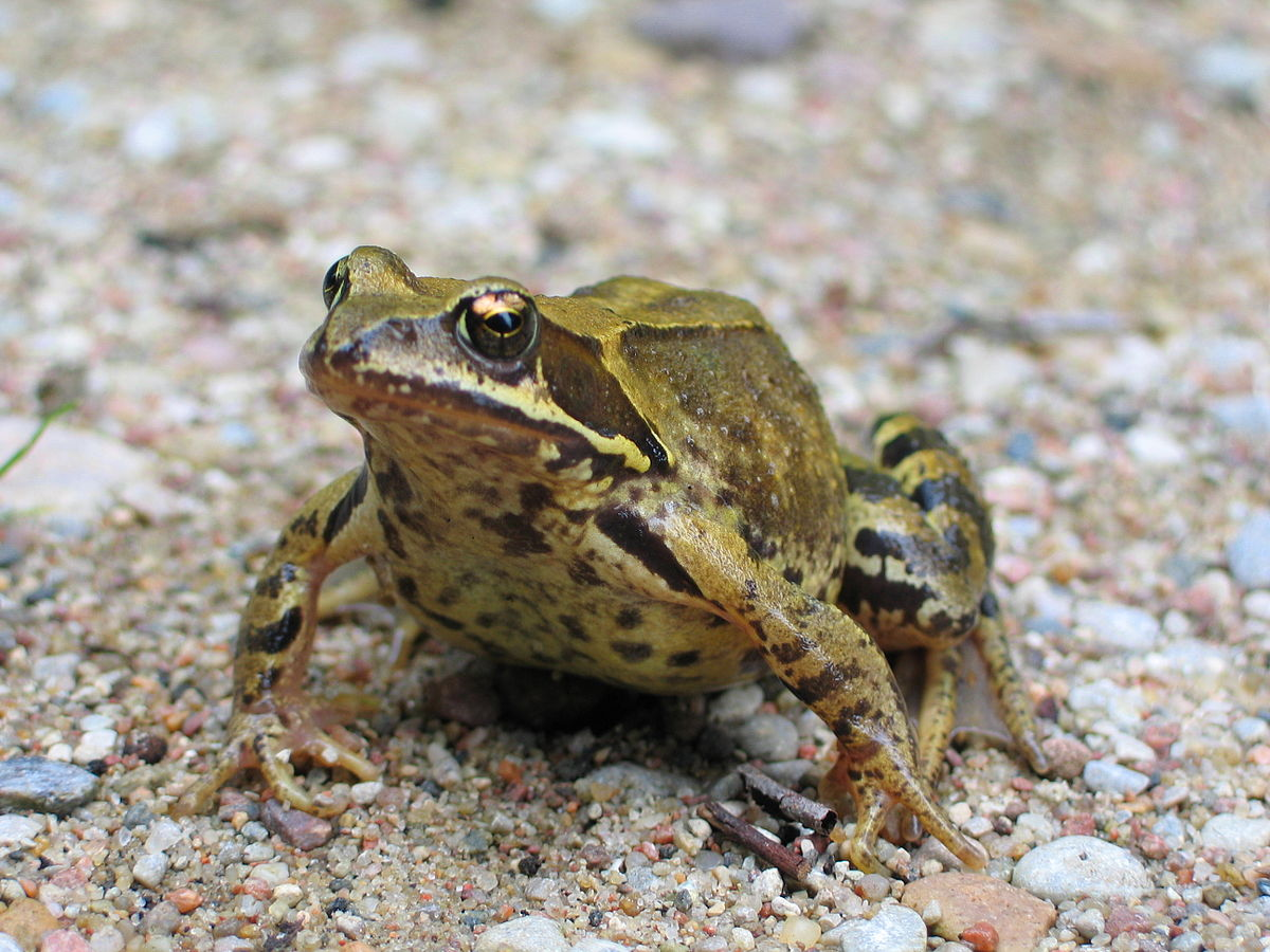Image Result For Frog On A