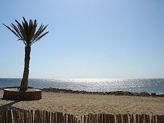 Plage de sable agrémentée d'un palmier durant une journée ensoleillée.