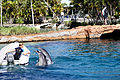 Dolphin Cove 34.jpg