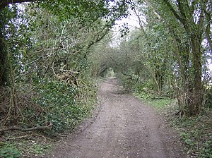 Bradley, Hampshire - A track leading into the interior of Down Wood.
