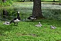 Drottningholm Palace park (6) (35867073280).jpg