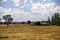 Drought-affected paddock in North Wagga.jpg