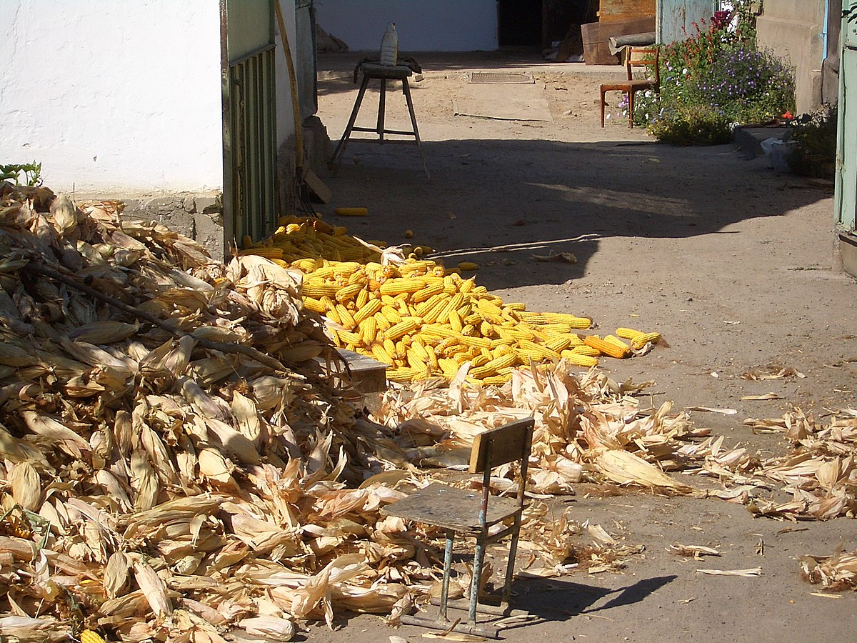 Can Corn Husk Bedding Be Used For Mice