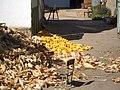 E8025-Milyanfan-corn-huskers.jpg