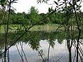 Ein sumpfiger Weiher - panoramio.jpg