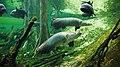 El bosque inundado amazonico-cosmocaixa-2009 (4).JPG