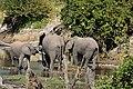 Elephant, Ruaha National Park (36) (28724629145).jpg