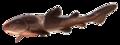 Entelognathus.png