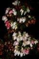 Erica glomiflora 0425.png