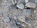Ethiopie-Danakil-Fossiles (1).jpg