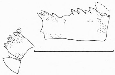 Eurypterids of the Devonian Holland Quarry Shale of Ohio figure 47.jpg