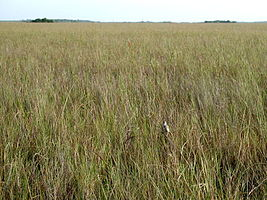 Everglades National Park CSSS inprairie.jpg