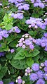 Everything Purple (158122991).jpeg
