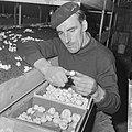 Ex-oesterkwekers in Yerseke halen de eerste champignons binnen, Marinus de Munck, Bestanddeelnr 916-0710.jpg