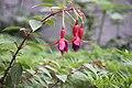Exotic flower by ganga hanspal.jpg