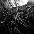 Exposed Roots II.jpg