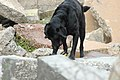 FEMA - 13226 - Photograph by Leif Skoogfors taken on 06-08-2005 in Florida.jpg