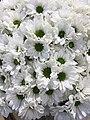 FLOWERs-30.jpg