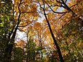 Fall Colors in Rock Creek Park - Flickr - treegrow (5).jpg