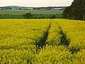 Farmland, Nether Wallop - geograph.org.uk - 808487.jpg