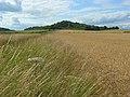 Farmland, Saunderton - geograph.org.uk - 892831.jpg