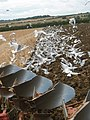 Feeding Frenzy - geograph.org.uk - 911022.jpg