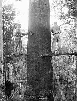 definition of logging